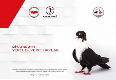 Diyarbakır Güvercinlerinin Tescillenmesi ve Tanıtım Projesi